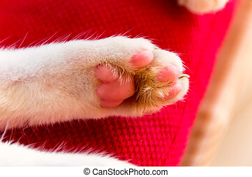 White Cats Paw