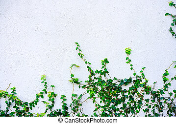 White cement background with plant