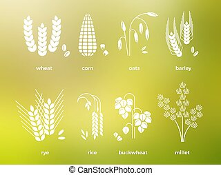 White cereal grains icons. rice, wheat, corn, oats, rye, barley