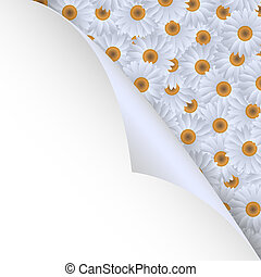 chamomiles and paper corner - White chamomiles and paper ...