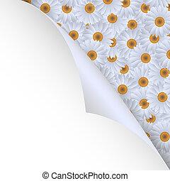 chamomiles and paper corner - White chamomiles and paper...