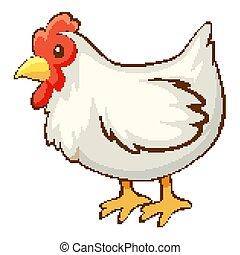 White chicken on white background