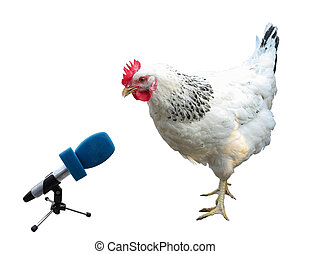 White chicken with microphone isolated over white