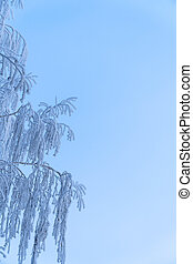 White Christmas frost on the branches of a birch