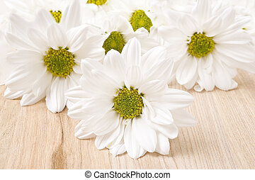 White chrysanthemum - very shallow depth of field