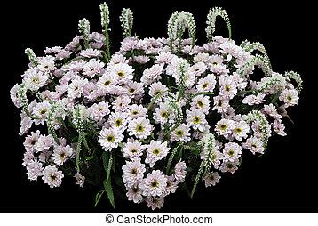 White chrysanthemums on black