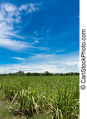 white clouds in blue sky with crop background