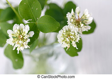white clover in a glass jug on wooden table