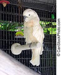 WHITE COCKATOO - BIRD