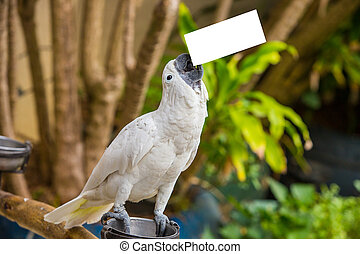 White cockatoo perched on a metal stand outdoors with a blurred background