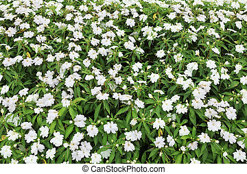 White colored flower bed