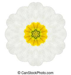 White Concentric Primrose Mandala Flower Isolated on Plain...