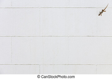 White concrete wall with lizard