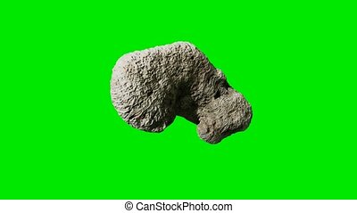 White coral fossil on green chromakey background