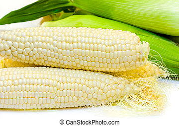 White corn - Freshly harvested white corn in close up view