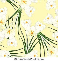 White Crocus Flower on Beige Ivory Background
