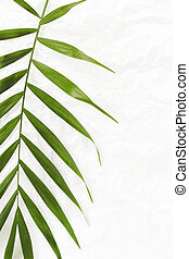 white crumpled paper background with palm leave