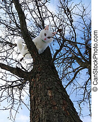 white cute cat on a tree branch