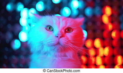 White cute furry cat on shiny flickering multi-colored...