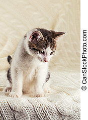White cute kitten with tabby head sitting on knitted blanket