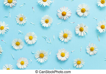 White daisies on a light blue background