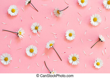 White daisies on a light pink background