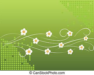 White daisies on vine