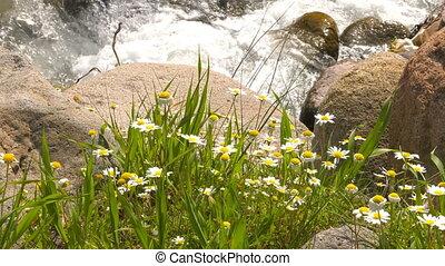 White Daisy and Waterfall