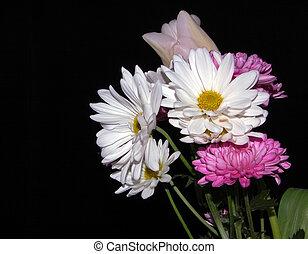 White Daisy Bouquet Black Background