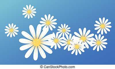 white daisy flower - drawing of white daisy flowers in a...