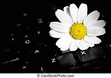 White Daisy Flower on Laptop