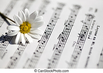 White Daisy Flower on Music Notes
