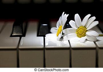 White Daisy Flower on Piano Keys