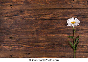 White daisy flower on wooden background.