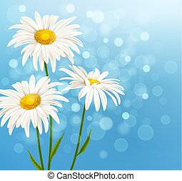 White daisy flowers on a blue background