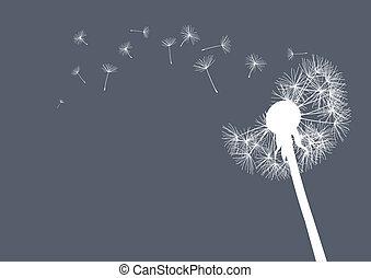 white dandelion on grey background