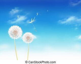 white dandelions on blue sky