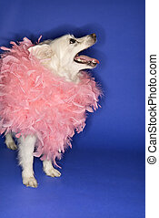 White dog in pink feather boa.