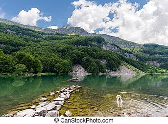 white dog in the lake