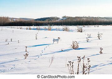 white dog in winter field