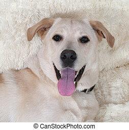 White dog lying on white sofa