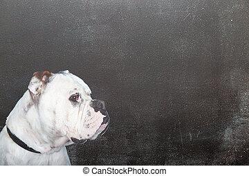 White Dog on Blank Black Chalkboard