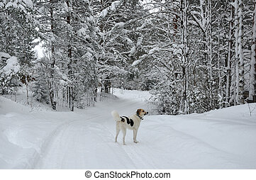 White dog on the snowy road in winter forest