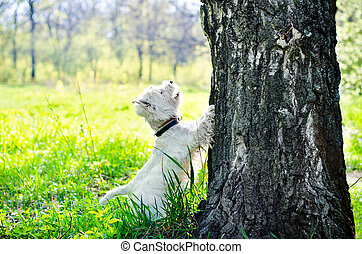 white dog on the grass