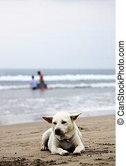 White dog on a Bali beach