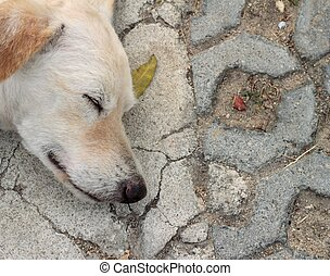 white dog sleeping on the ground.