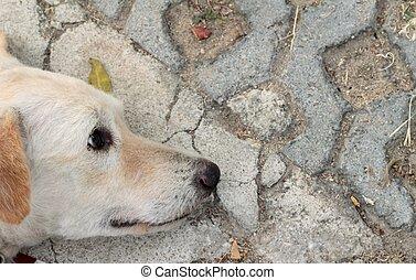 white dog sleeping on the ground.