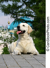 White dog lying on a tile against a blue dome
