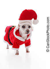 White dog wearing a red and white santa costume - Small...