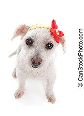 White dog wearing bandana with flower decoration